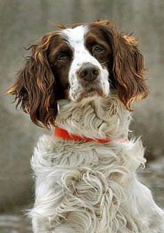Beautiful dog portrait Check more at http://hrenoten.com - British Country Clothing offer a range of quality British made clothing ideal for country pursuits