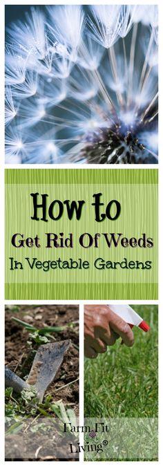 How To Get Rid Of Weeds In Vegetable Garden