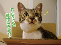 うにもみてん、よろず話44 うにオフィシャルブログ「うにの秘密基地」Powered by Ameba