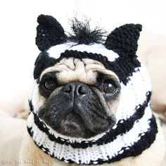 6fb148cc3e3 74 Best All You Need is Pug Hats images