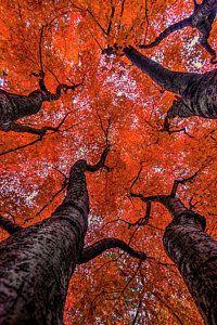 Spokane Photograph -  Nishinomiya Japanese Garden - Autumn Trees by Mark Kiver