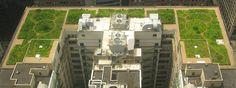 Viherkatot pakollisiksi Ranskassa - Kasvit voi vaihtaa aurinkopaneeleihin, jos haluaa.  Kaikkien liikerakennusten katolle täytyy uuden lain mukaan vastedes rakentaa viherkatto tai aurinkovoimala Ranskassa, kertoo Guardian.