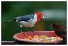 imagenes aves del paraiso - Buscar con Google