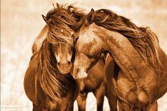 Roberto-dutesco-fotografia-decoracion-casa-day-and-horse