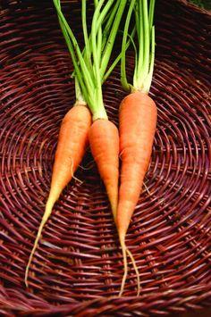 DANVERS HALF LONG CARROT (75 days) (HEIRLOOM) - Pinetree Garden Seeds - Vegetables  - 1