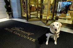 Nine Super Pet-Friendly Hotel Chains - SmarterTravel.com