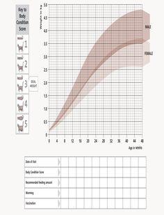 Kitten growth chart from Hill's