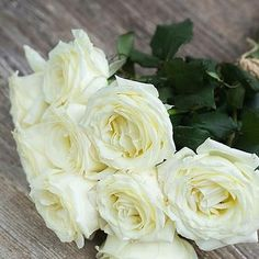 A creamy white, cabbage shaped rose with frilly petals and a strong fragrance. Fragrance potency scale 5/5.