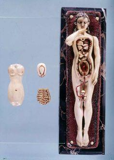 Anatomical Manikin with removable organs via Dream #Anatomy, c. 1500-1700