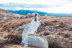 Affordable and Gorgeous Wedding Veils