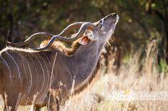 Beautiful Askari Lodge Wedding of Sandra & Jaco Game Lodge, Lodge Wedding, Jaco, Game Reserve, Wildlife, Spa, Africa, Horses, Animals