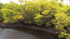 [SPOT]: Everglades National Park  [Sitio web de contacto]: > http://almarviajes.com.ar/Contact <  Consúltenos por reuniones informativas personalizadas y por la Visa estadounidense.  Equipo de Almar Viajes, Amigos de Viajes.  EVyT - LEG 15220 - RESO 1040 / 2012
