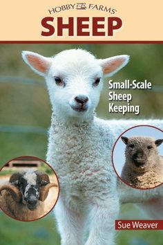 Sheep: Small-Scale Sheep Keeping For Pleasure And Profit (Hobby Farm) by Sue Weaver. $10.55