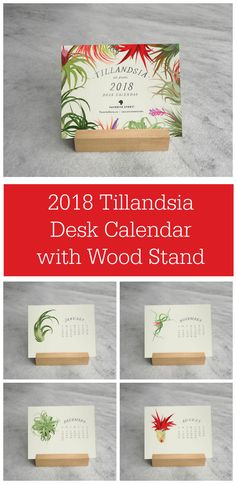Gorgeous Desk Calendar for 2018! Be the envy of your workplace or enjoy it in your home office :) #2018 Tillandsia #Desk #Calendar with Wood #Stand | air plants | Botanical Illustrations | #ad