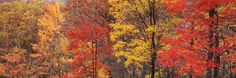Roaring Fork Fall Trees, Smoky Mountains Mural - Danny Burk| Murals Your Way