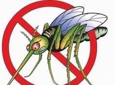 Oικολογική παγίδα για κουνούπια! - DIYself.gr - Οδηγίες βήμα βήμα για απίθανες κατασκευές που μπορείτε να φτιάξετε μόνοι σας