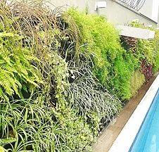 Jardim Vertical Natural   Proporcione Beleza, Conforto Térmico, Eficiencia  Energetica E Vida Aos Seus