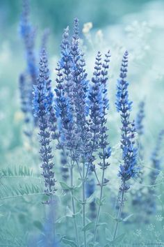 Flowers Aesthetic Pastel Blue Super Ideas – Best Home Plants Blue Aesthetic Pastel, Rainbow Aesthetic, Nature Aesthetic, Flower Aesthetic, Aesthetic Backgrounds, Aesthetic Wallpapers, Wallpeper Tumblr, Everything Is Blue, Blue Wallpapers