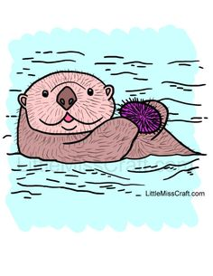 Otter Page Coloring Sheets Monterey Bay Aquarium A Family of