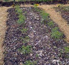 organic plant spacing and companion planting Organic Garden Pest Control & Prevention