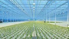 Vertical Farming, Part 1: An Introduction