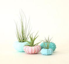 He encontrado este interesante anuncio de Etsy en https://www.etsy.com/es/listing/185546998/teeny-tiny-air-plant-urchin-planter-set