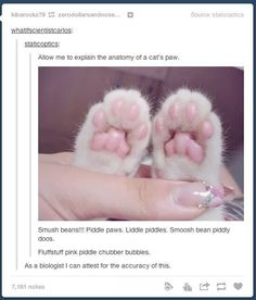 Cats 101: | 27 Cat Pictures That Are Never Not Funny