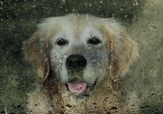 Preparing for Natural Disasters | The Bark
