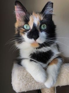 we love cats. Cute Cats And Kittens, Baby Cats, Cool Cats, Kittens Cutest, Ragdoll Kittens, Funny Kittens, Grumpy Cats, Animals And Pets, Baby Animals