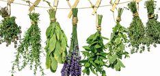 12  super ervas  aromáticas