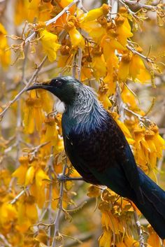 Key Tattoos, Skull Tattoos, Foot Tattoos, Sleeve Tattoos, Pretty Birds, Beautiful Birds, Unusual Animals, Cute Animals, New Zealand Wildlife
