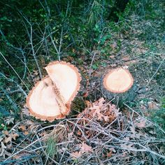 Bir taraf yaş, bir taraf kuru ve ortasında yine kesilmiş ağaç! #vscocam