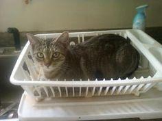Drainer Cat