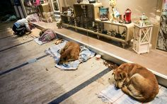 We are thankful the Atrium Mall in Turkey opened up their doors to allow the homeless dogs a warm place to sleep for the night. While we love and adore the dogs we share our homes with, the fact that there are some 70 million stray cats and dogs living on the streets gets easily ignored.