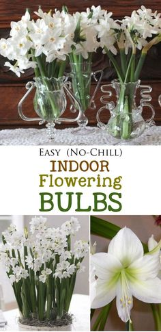 Fragrant vases of paperwhites and gorgeous, tall amaryllises! Be sure to plan ahead to have flowers in bloom in time for a special occassion. These bulbs are simple to grow, do not require chilling, and look gorgeous for weeks. If you've never tried forcing bulbs, now is the time. Enjoy! #sponsored