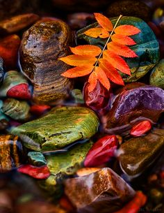 ^Autumn colors