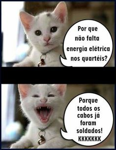 Funny Images, Funny Pictures, Smiling Cat, Ted, Good Humor, Life Is Strange, Minions, Funny Jokes, Joker
