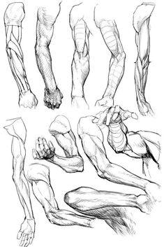 Image result for anatomia braços