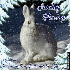 Consultez le picmix sunday appartenant à patriciasalsbury sur pi Happy Sunday Quotes, Blessed Quotes, Funny Thoughts, Thoughts And Feelings, Snow Scenes, Winter Scenes, Minion Pictures, Gif Pictures, Blessed Friends