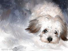 Maltese Dog Pet Portrait Original Art Painting Canvas Giclee Print Large | eBay