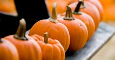 Do you remember being a kid and going to the pumpkin patch? It was one of the funnest activities you did that year, picking out a pumpkin to take home and carve as a family! Take your kids this year! Pumpkin Spice Latte, Pumpkin Puree, Oreo, Pumpkin Cheesecake Bars, Raisin Cookies, Healthy Pumpkin, Belleza Natural, Pumpkin Recipes, Fall Recipes