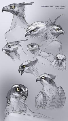 zebrafeet birds of prey