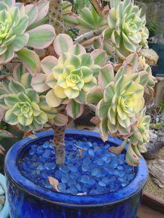 Deko Ideen für den Garten mit Fettpflanze in einem Blumentopf