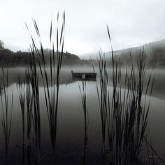 Reeds @ Photowall