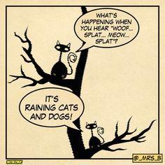 #badcatjokes #cats