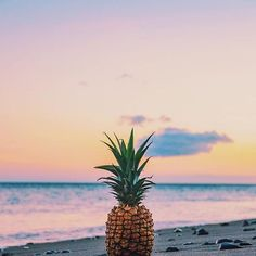 The Salty Pineapple Shop Tumblr Pineapple, Pineapple Wallpaper Tumblr, Pineapple Backgrounds, Pineapple Art, Pineapple Painting, Tumblr Backgrounds, Cute Backgrounds, Cute Wallpapers, Wallpaper Backgrounds