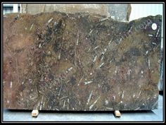 Bhandari marble group  Fossil Brown Marble is gorgeous and, looks wonderfull after all finishing has been done, Marble can be use as wall cladding, bar top, fireplace surround, sinks base, light duty home floors, and tables.