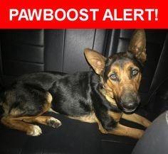Is this your lost pet? Found in Fontana, CA 92337. Please spread the word so we can find the owner!  Black and tan German Shepherd  Near Cypress Ave E & Citrus Ave