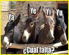 imagenes graciosas de burros