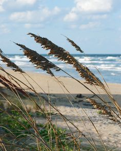 Florida Sea Oats and Ocean 8x10 Photograph by FLnaturally on Etsy, $15.00